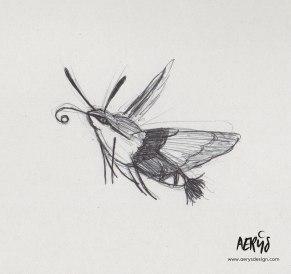 Moro-sphynx